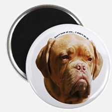 Dogue De Bordeaux Magnet
