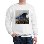 Baby Steller's Jays Sweatshirt