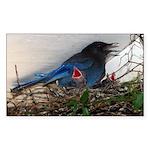 Baby Steller's Jays Rectangle Sticker 50 pk)