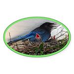 Baby Steller's Jays Oval Sticker (10 pk)