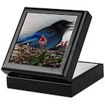 Baby Steller's Jays Keepsake Box