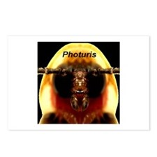 Photuris Postcards (Package of 8)