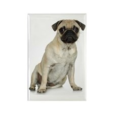 Fawn Pug Rectangle Magnet