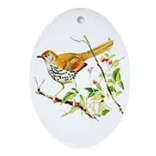 Brown Thrasher Oval Ornament