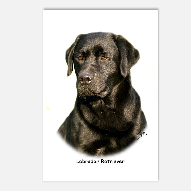 Labrador Retriever 9Y245D-018 Postcards (Package o