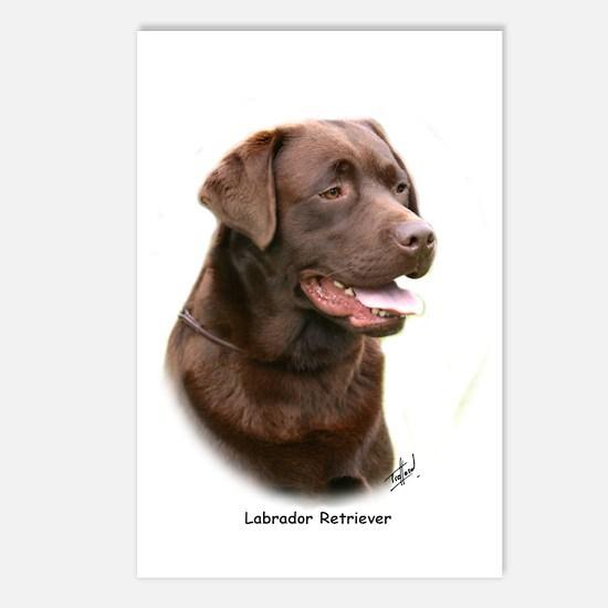 Labrador Retriever 9Y243D-004a Postcards (Package
