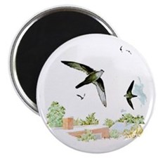 Chimney Swift Magnet