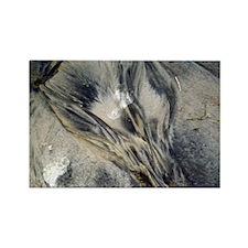 Footprints sand Rectangle Magnet