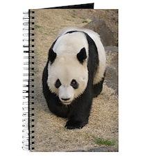 Pandas 003 Journal