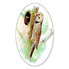 Common Flicker Oval Decal