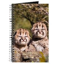 Cougar Kitten Journal