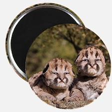 Cougar Kitten Magnet