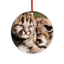 Cougar Kitten Ornament (Round)