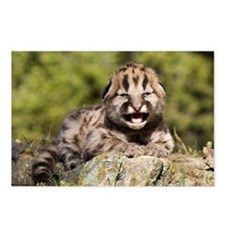 Cougar Kitten Postcards (Package of 8)