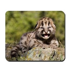 Cougar Kitten Mousepad