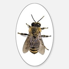Big Honey Bee Oval Decal
