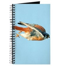 American Kestrel Journal