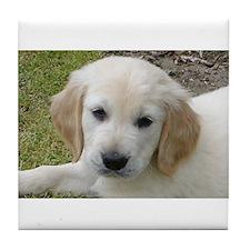 Cool Golden retriever puppy Tile Coaster