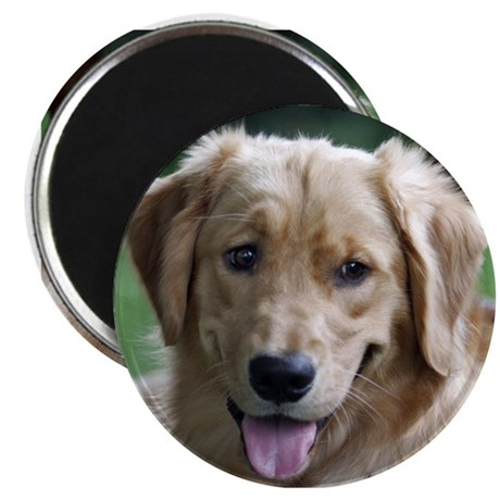Smiling Golden Retriever Magnet
