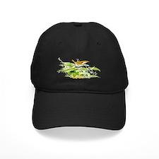 House Wren Baseball Hat
