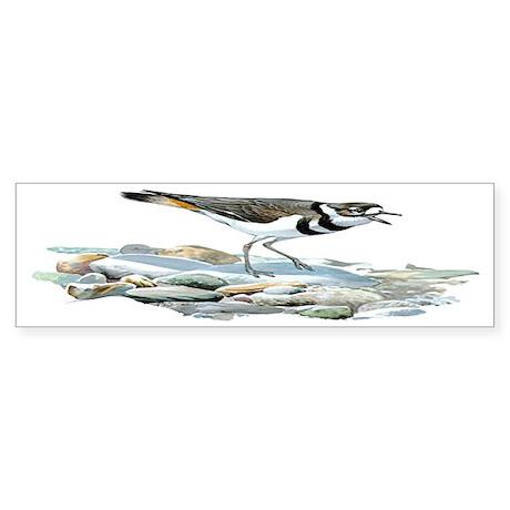 Kildeer Bird Bumper Sticker