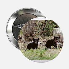 Black Bear cubs Button