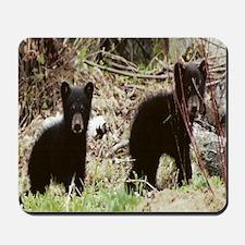 Black Bear cubs Mousepad