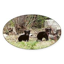 Black Bear Inc Oval Decal