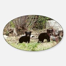 Black Bear Inc Oval Decal
