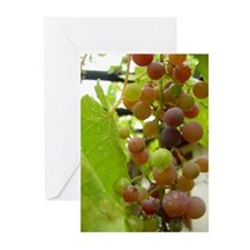 Cool Art photography Greeting Cards (Pk of 10)