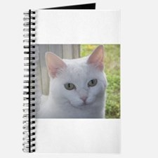 Sugar Kitty Collection Journal