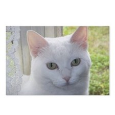 Sugar Kitty Collection Postcards (Package of 8)