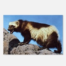 Wolverine Photo Postcards (Package of 8)
