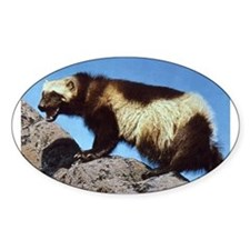Wolverine Photo Oval Decal