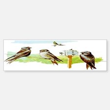 Purple Martin Bird Bumper Bumper Bumper Sticker