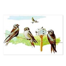 Purple Martin Bird Postcards (Package of 8)