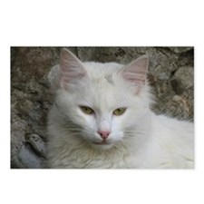 White Cat Photo Postcards (Package of 8)