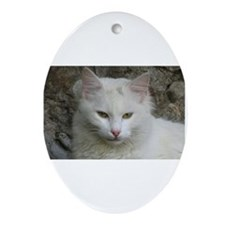White Cat Photo Oval Ornament