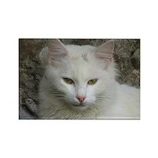 White Cat Photo Rectangle Magnet