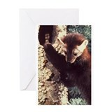 Pine marten Greeting Cards