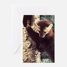 Pine Marten Photo Greeting Card