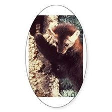 Pine Marten Photo Oval Decal
