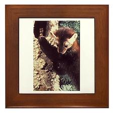 Pine Marten Photo Framed Tile