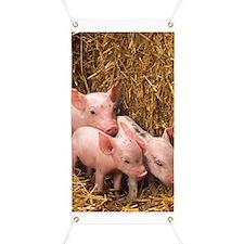 Piglets Photo Banner