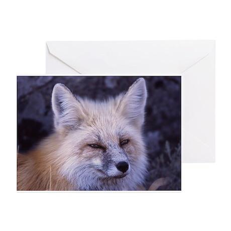 Fox Photo Greeting Cards (Pk of 10)