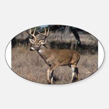 Deer Photo (Buck) Oval Decal