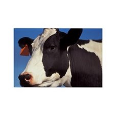 Cow Photo ! Rectangle Magnet