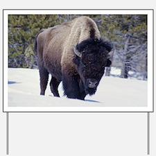 Bison Photo Yard Sign