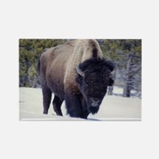 Bison Photo Rectangle Magnet