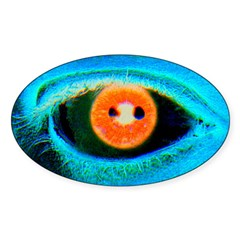 Catch the RED-Eye on Oval Decal